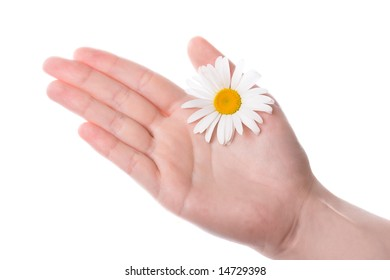 one women hand holding daisy flower with white background