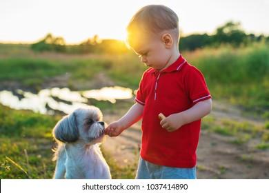 One year child feeding dog on nature walking. Sunset light colors.