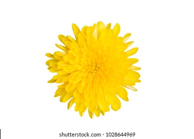 Single flower white background images stock photos vectors one yellow dandelion flower isolated on white background close up mightylinksfo