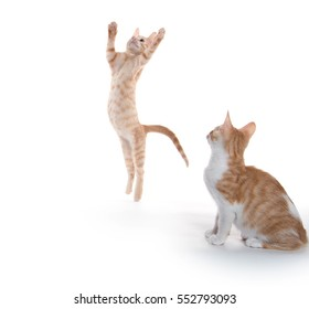 One yellow tabby kitten leaps in the air while another look on isolated on white background
