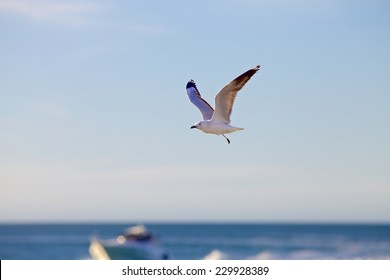 One-legged seagull flying above the sea on a blue background