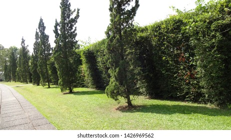 ones of the corner at nusantara flower garden in indonesia. its one of the biggest garden on the world