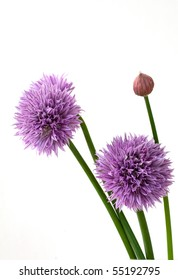 Onion chives isolated on white