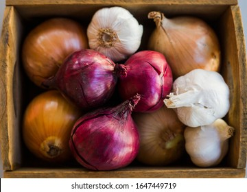 Onion Family Images Stock Photos Vectors Shutterstock