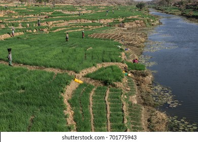 Onion farms near Bandiagara escarpment, Dogon Country, Mali