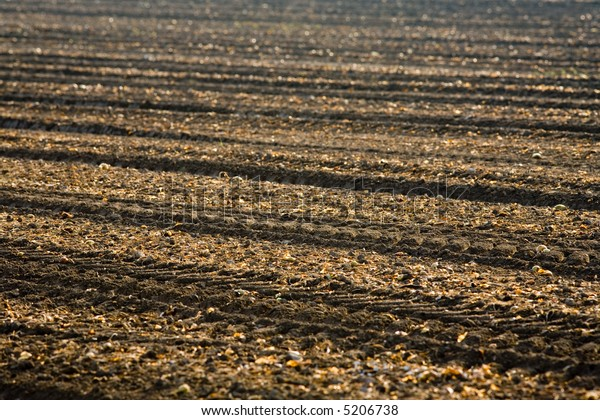 Onion field after the harvest took place