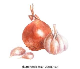 Onion and garlic. Watercolor illustration.