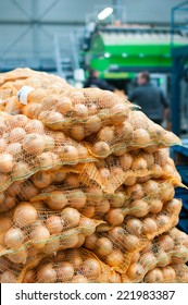 Onion packed in the hall ready for shipment