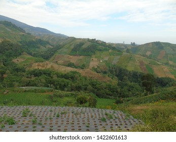 Onion Plantation in Argapura, Majalengka, often called Panyaweuyan terracing rice fields.