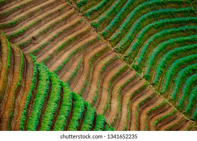 The Onion Plantation in Majalengka