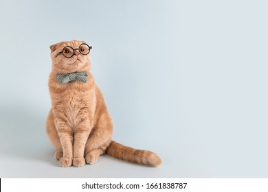 Online courses, remote distant education banner concept. Funny cat in bow tie and glasses sitting on blue background and looking at copy space for text or product.
