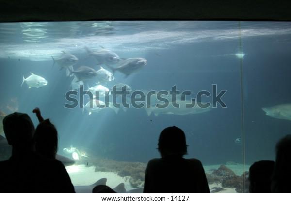 onlookers at aquarium