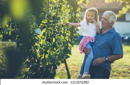 Only healthy life. Granddaughter and grandfather spend time in the orchard. Copy space.