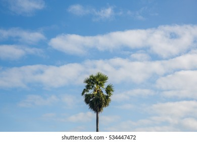 Only palm tree with blue sky and cloud. Copy space area.