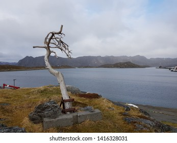 the only tree on the Magerøy island in Nordkapp county located in the small village of Karmøyvær