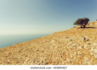 The only tree on the mountain. High on top of the mountain. On the plateau. The sea is on the horizon. Sea and mountains. The bare earth.