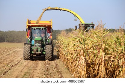 OOIJEN, THE NETHERLANDS - SEPTEMBER 16, 2016 : A combine harvester harvesting maize corn in a field