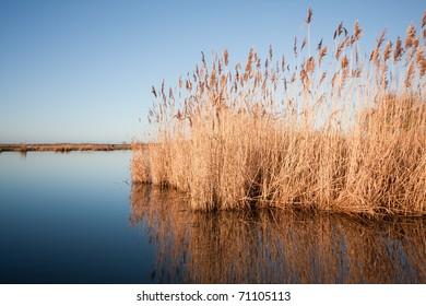 Oostvaardersplassen nature reserve (the Netherlands)
