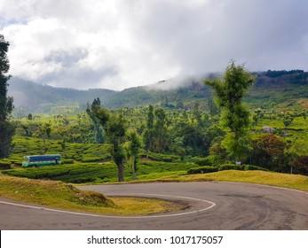 Ooty countryside, Tamil Nadu, India