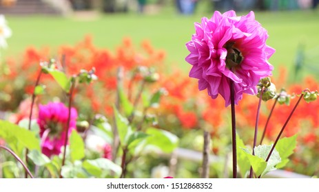 Ooty Gardens located in Ooty India. Beautiful flowers, plants and trees welcoming tourists