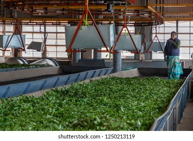 OOTY, TAMIL NADU, INDIA - OCTOBER 25, 2018: Inside a tea on the outskirts of Ooty (Udhagamandalam), where various stages of the process turn leaves into tea, graded for different varieties.