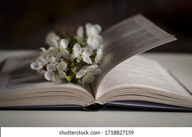 Open book with blossom branch of cherry-tree on table