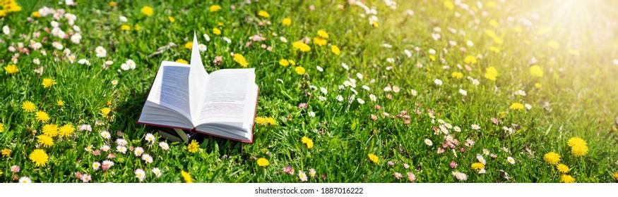 Offenes Buch im Gras auf dem Feld an sonnigen Tag im Frühling. Schöne Wiese mit milden und blühenden Kronleuchtern im Frühling. Lese- und Wissenskonzept