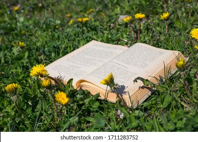 open book in grass and yellow flowers