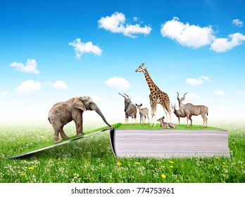 Open book of nature with animals on meadow.