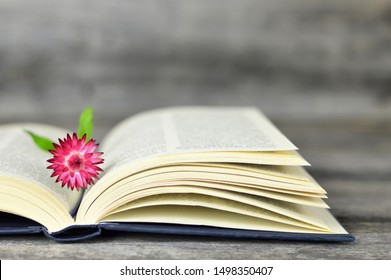 Open book and pink strawflower