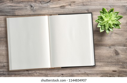 Open book and succulent plant on wooden background. Minimal flat lay