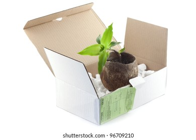 Open box with packing 'peanuts' and flowerpot isolated on white