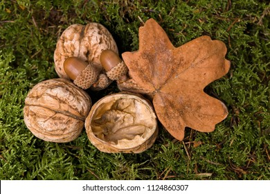 Open and closed walnuts and leaf lying on soft moss