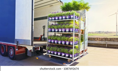 Open delivery truck loaded with pot plants pallets . There is a loading to the truck trailer  .