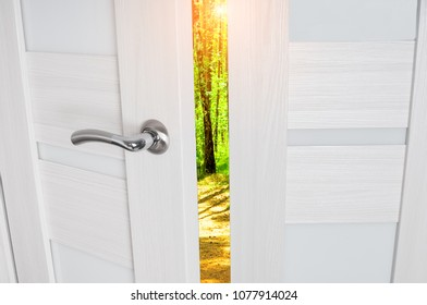 Open door in a summer forest with sun light