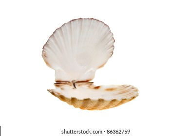 Open empty scallop shell isolated against white