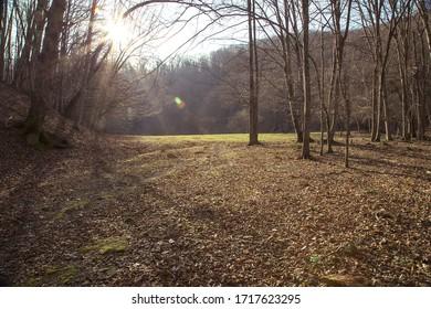 open field in forest in autumn