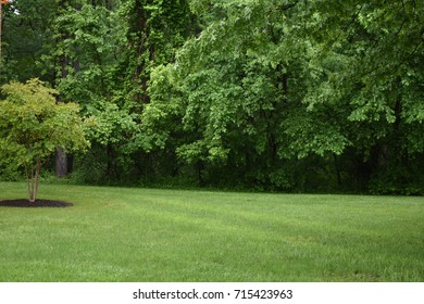 Open field with green grass and trees with perfect manicured lawn