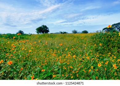 An open field with many small yellow wild flowers.