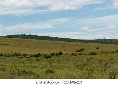 Open field with wild animals in a distance