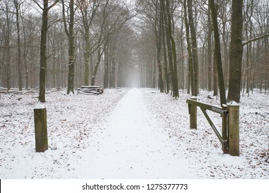 Open gate with first snow this winter in the Veluwe forest near Apeldoorn
