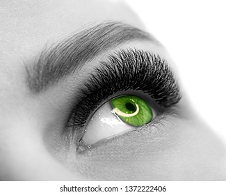 Open green eye of woman with eyelash extension. Well groomed skin, macro shot, black and white, close up, selective focus. Beauty service and products, fashion, make up, cosmetic, medicine, laser