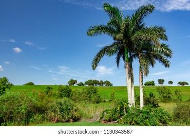 Open green grass hills with palm trees against blue sky, copyspace - Vista View Park, Davie, Florida, USA
