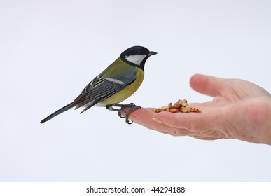 open hand and greater titmouse