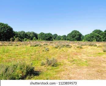 Open heath at Budby South Forest in Nottinghamshire, on the edge of Sherwood Forest, on a bright sunny summer day.