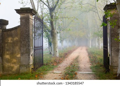 Open iron gate on forest foggy path in autumn day