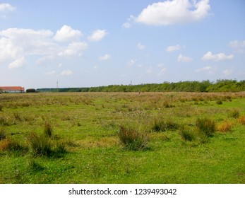 Open meadows outside a small town in Europe.  Tranquil and green walking meadows outside Coroi Romania