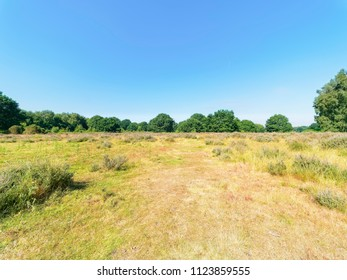 Open moorland at Budby South Forest, on the fringes of Sherwood Forest, in Nottinghamshire on a bright sunny summers day.