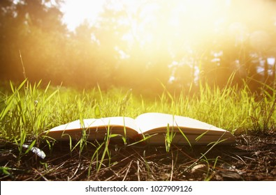 open old book over green spring grass in forest at sun light