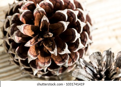 Open Pine Cones on Display